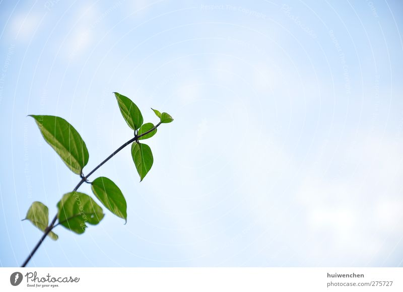 Sky Nature Plant Blue Green Beautiful Leaf Life Spring Healthy Freedom Fresh Power Beginning Future Joie de vivre (Vitality)