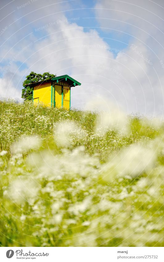 Sky Nature Blue Green Summer Plant Flower Clouds House (Residential Structure) Landscape Yellow Meadow Spring Grass Flat (apartment) Living or residing