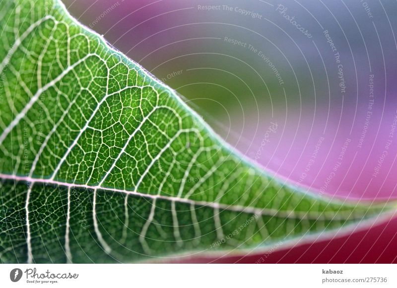 out Harmonious Well-being Contentment Nature Plant Leaf Foliage plant Relaxation Warmth Green Pink Joie de vivre (Vitality) Colour photo Exterior shot Day