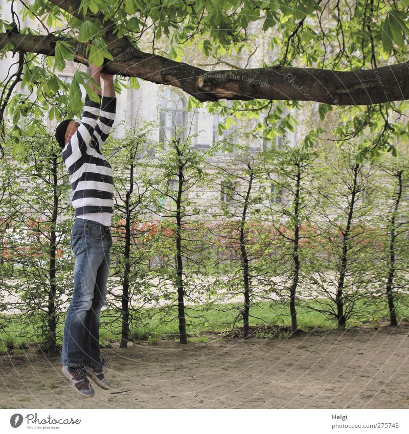 Man in jeans and striped sweater hanging by his arms from a thick branch Leisure and hobbies Human being Adults Life 1 45 - 60 years Nature Plant Tree Bushes
