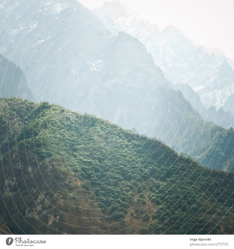 Green Hills Environment Nature Landscape Plant Bushes Mountain High mountain region China Yunnan Exceptional Threat Dark Gigantic Large Adventure Tourism