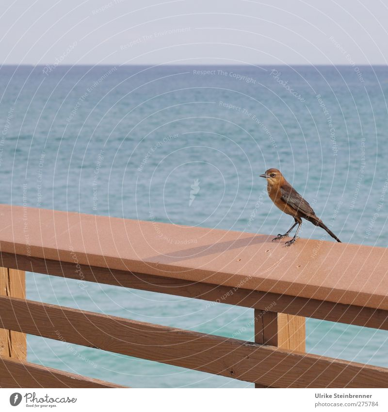 Water Vacation & Travel Ocean Animal Far-off places Life Freedom Bird Horizon Wild animal Natural Wait Tourism Happiness Stand