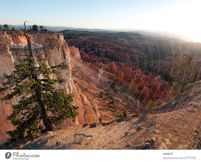 Utah morning Cloudless sky Beautiful weather Tree Rock Mountain Canyon Blue Brown Red Horizon Idyll Calm Far-off places Bryce Canyon Colour photo Exterior shot