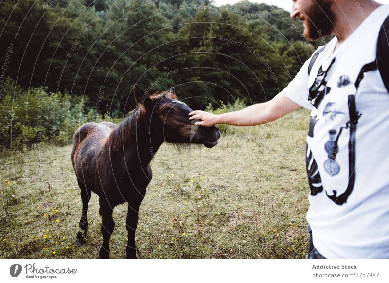 Cheerful man stroking foal Man Foal Horse Small Farm Grass Brown Ranch Landscape Beauty Photography Animal Nature Green Meadow Beautiful Large-scale holdings