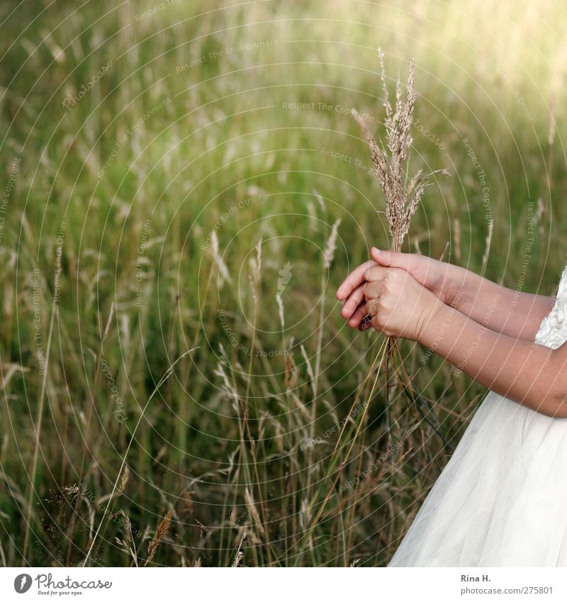 Human being Child Nature White Green Hand Summer Plant Girl Environment Meadow Grass Infancy Arm Dress Blade of grass