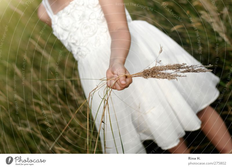Human being Child Nature White Green Summer Girl Meadow Grass Infancy Dress Section of image Anonymous Partially visible 3 - 8 years Headless