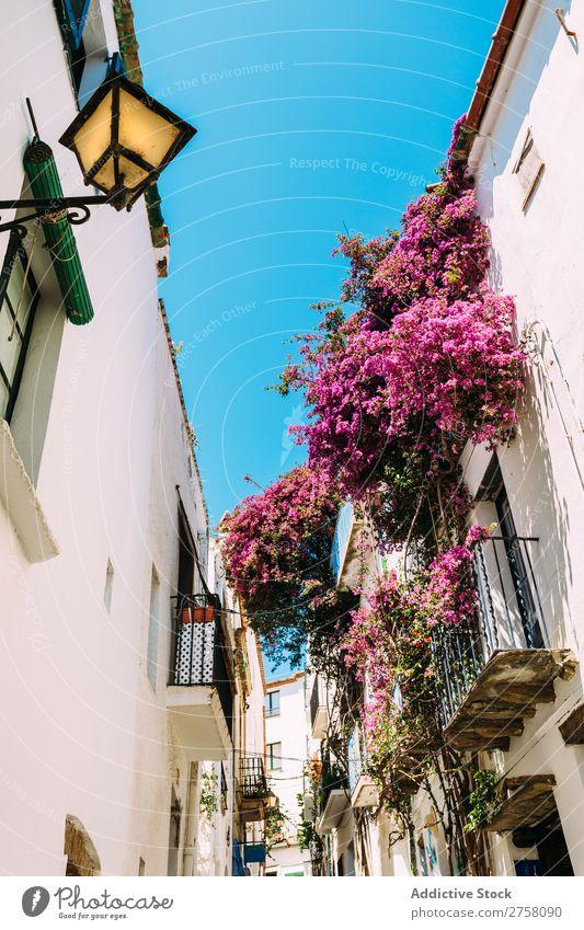 Rural streets in Cadaques, Spain costa brava cadaques spain catalonia rural white mediterranean village traveleurope spanish famous summer sky architecture view