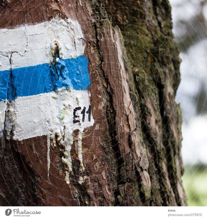 E11 Beautiful weather Tree Tree trunk Tree bark Moss Forest Sign Digits and numbers Signs and labeling Signage Warning sign Hiking Blue White Accuracy