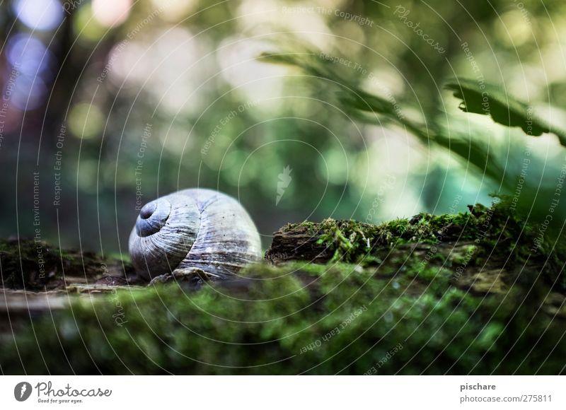 Speed snail, sleeping right now... Nature Moss Animal Snail Beautiful Multicoloured Green Romance Movement Calm Snail shell Blur Colour photo Exterior shot