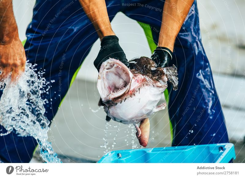 Man holding a monkfish Fish Animal Blue Box Diet Food Fresh Healthy Horizontal Ice Industry marine Markets Mediterranean Nature Nutrition Ocean palamos