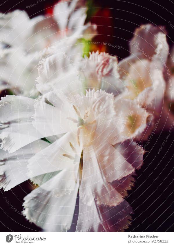 Nature Plant Green White Flower Leaf Yellow Blossom Art Orange Pink Illuminate Creativity Blossoming Bouquet Double exposure