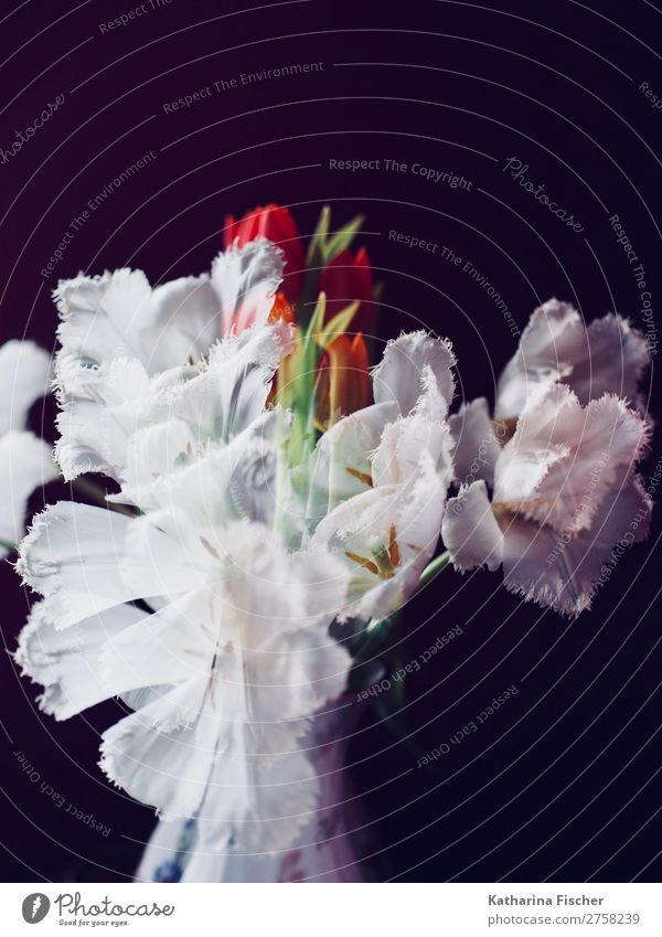 Double exposure white flowers tulips bouquet of flowers Art Nature Plant Flower Tulip Leaf Blossom Bouquet Blossoming Illuminate Growth Exceptional Fragrance