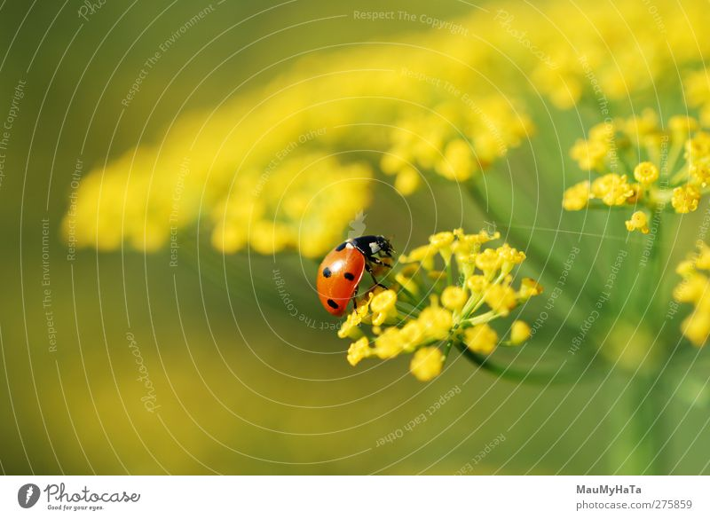 Ladybug Nature Water Summer Plant Sun Flower Colour Animal Leaf Relaxation Grass Freedom Blossom Garden Field Climate
