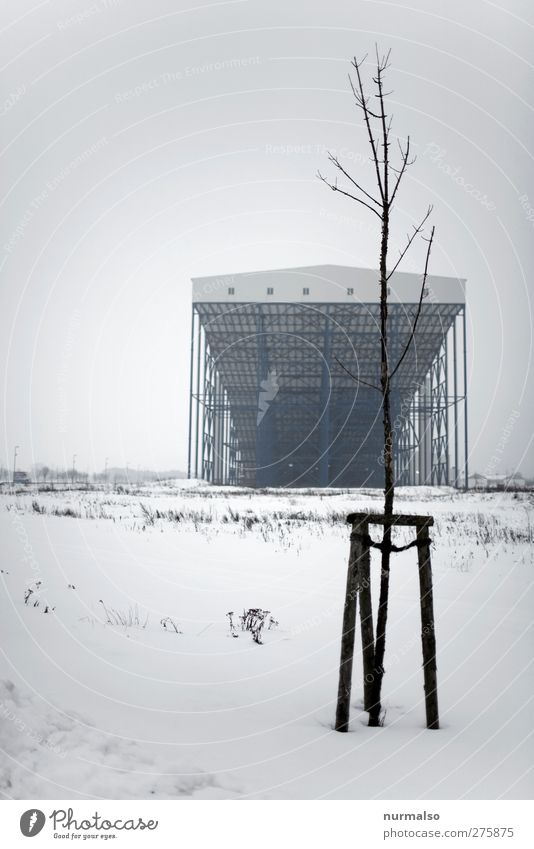 Tree Plant Loneliness Winter Environment Dark Cold Snow Architecture Dream Art Leisure and hobbies Factory Manmade structures Whimsical Freeze