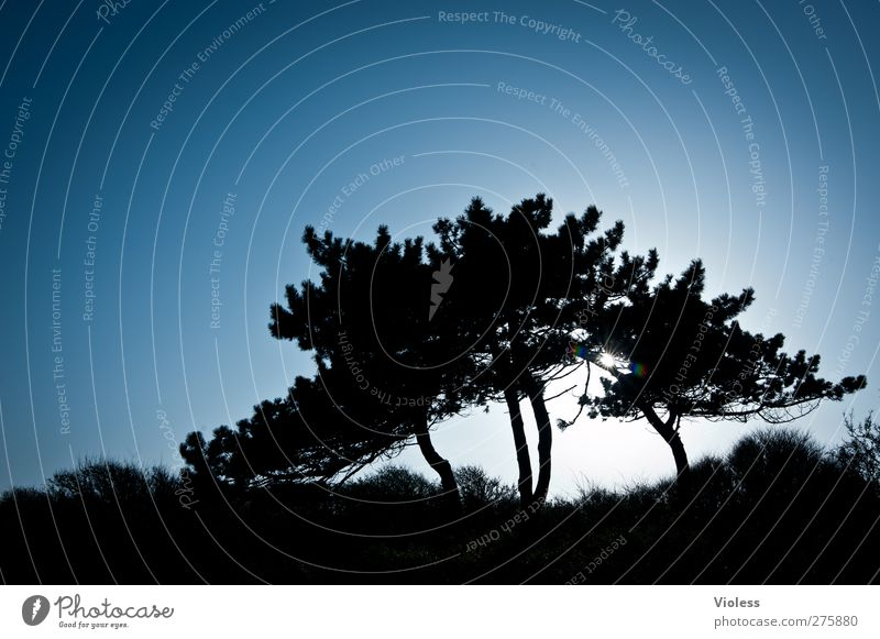 Tree Plant Dream Contentment Power Esthetic Illuminate Pine Hiddensee