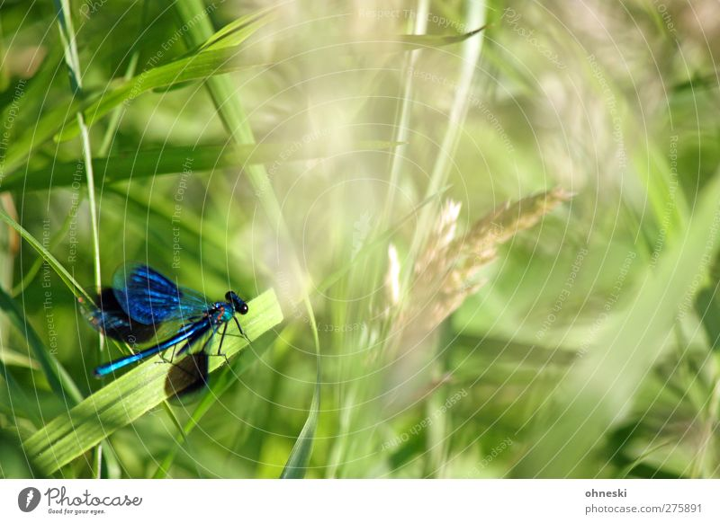 departure Animal Grass Wild animal Dragonfly Insect Dragonfly wings 1 Flying Wait Elegant Exotic Blue Green Turquoise Colour photo Multicoloured Exterior shot