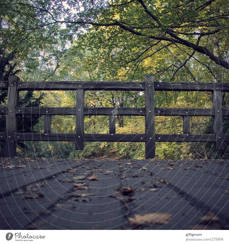 on the wrong track Environment Nature Plant Tree Leaf Forest Nostalgia Autumn Autumn leaves Autumnal Deciduous tree Handrail Bridge railing Wood Woodway