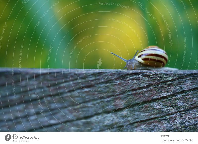 Nature Summer Animal Wood Stripe Serene Wooden board Snail Crawl Striped Slowly Mollusk Snail shell Blur Greeny-yellow Slow motion