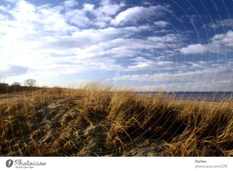 Ocean Plant Clouds Grass Sand Iceland Beach dune Baltic Sea Rügen Usedom