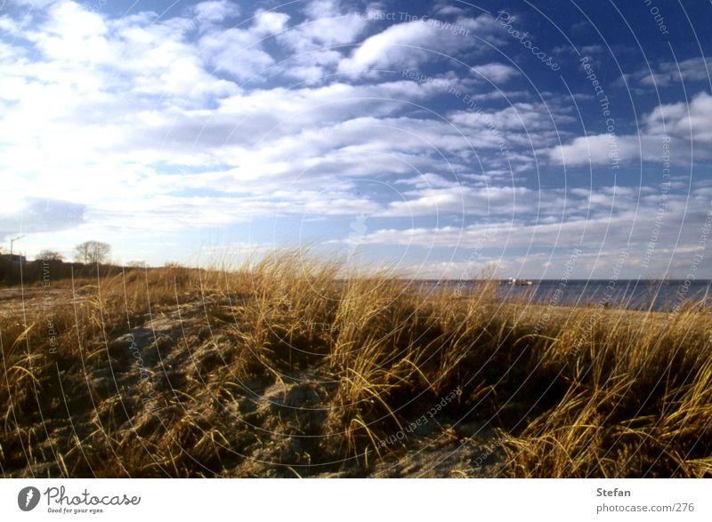 On the white beach of... Rügen Grass Ocean Usedom Clouds Plant Iceland Beach dune Baltic Sea sea coast shoreline Sand
