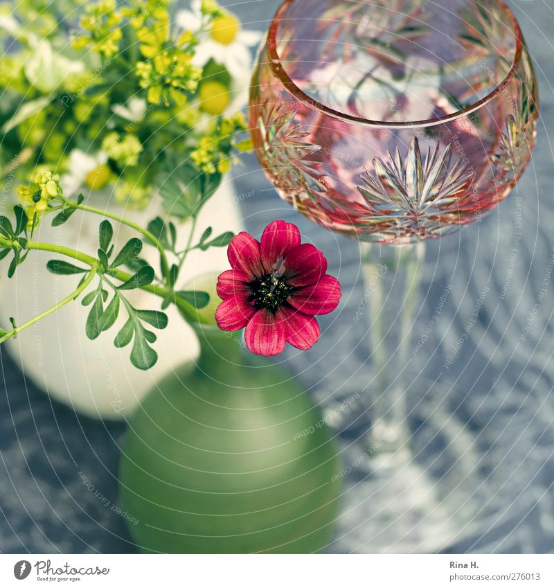 Still Glass wine glass Living or residing Flower rue chocolate flower Vase Tablecloth Table decoration Blossoming Still Life Colour photo Exterior shot Deserted
