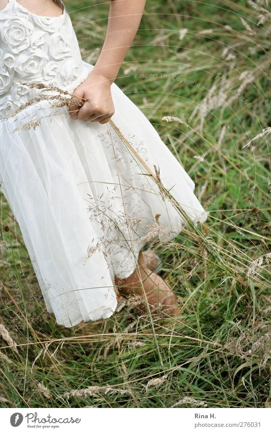 Human being Child Nature Summer Girl Meadow Life Grass Infancy Natural Individual Dress To hold on Section of image Anonymous Partially visible