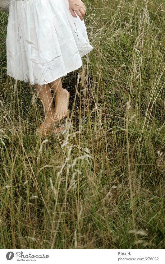 It's stinging! Girl 1 Human being 3 - 8 years Child Infancy Nature Summer Grass Meadow Dress Going Barefoot Search Colour photo Shallow depth of field