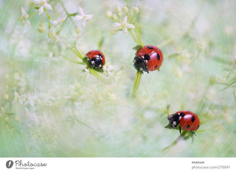 Nature Plant Animal Emotions Happy Blossom Feasts & Celebrations Natural Wild animal Birthday Happiness Team Sign Joie de vivre (Vitality) Beetle Ladybird