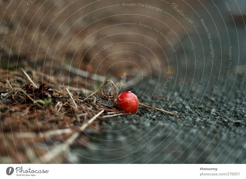 zoom Environment Nature Earth Cherry Asphalt Dirty Fragrance To fall Lie To dry up Old Exotic Fantastic Near Wet Round Red Calm Interest Colour photo