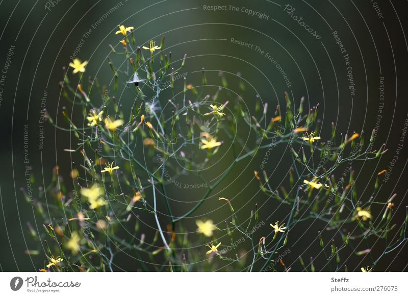 Nature Plant Green Summer Flower Forest Bushes Blossoming Many Thin Twig Delicate Overgrown Wild plant Branched Swirl