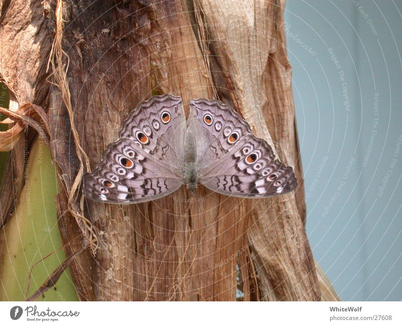 Summer Animal Flying Sit Wing Butterfly Judder