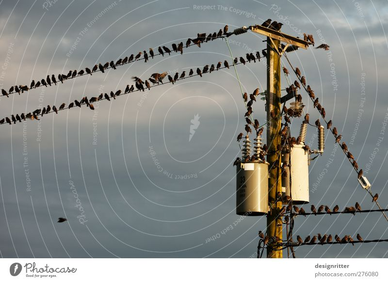 Sky Animal Clouds Funny Bird Flying Sit Energy industry Electricity Cute Many Cable Argument Crowd of people Electricity pylon Agree