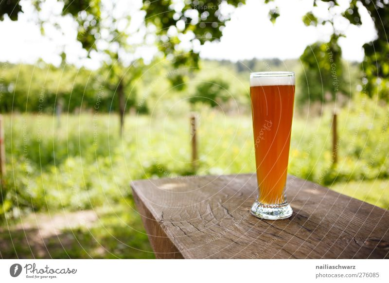 summer day Beverage Cold drink Alcoholic drinks Beer Landscape Plant Grass Garden Meadow Glass Beer glass Relaxation Delicious Brown Yellow Green Spring fever