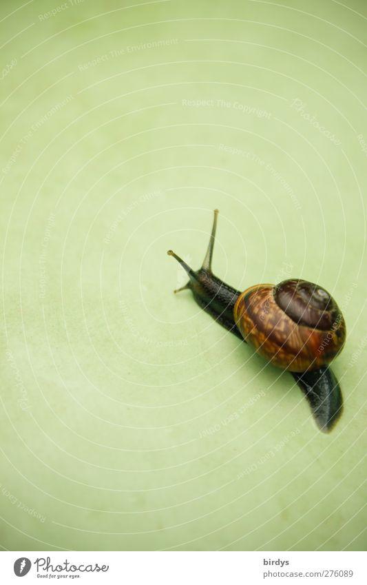 Green Beautiful Animal Life Movement Brown Elegant Esthetic Target Friendliness Pure Snail Crawl Forwards Slowly Snail shell
