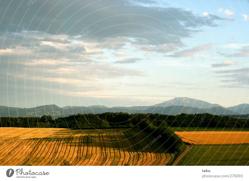 ...LINES... Nature Landscape Earth Sky Clouds Sun Sunlight Summer Beautiful weather Field Hill Mountain Brown Yellow Gold Green White Loneliness Moody Symmetry