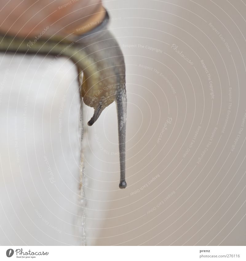 snail Environment Nature Animal Wild animal Snail 1 Brown Gray Feeler Wall (building) Downward Colour photo Exterior shot Deserted Day Blur