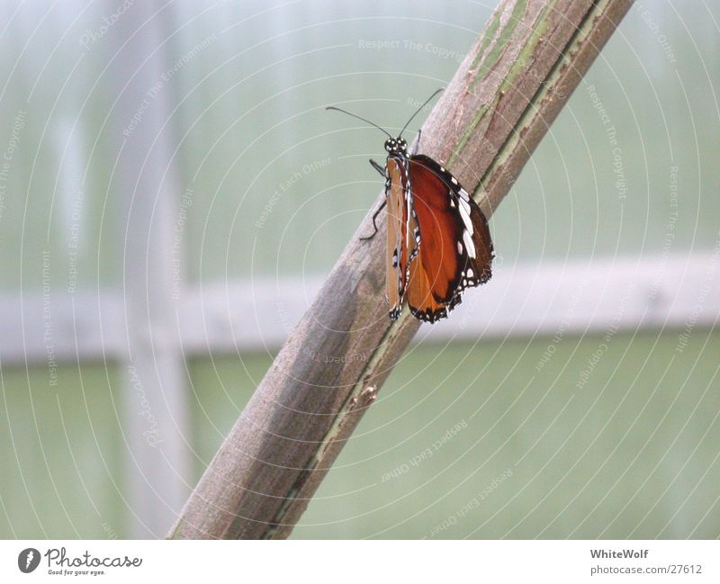 Beautiful Animal Flying Sit Wing Butterfly Judder