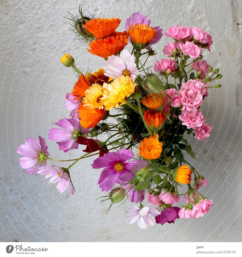 garden flowers Plant Flower Rose Blossom Wild plant Bouquet Concrete Gray Green Violet Orange Pink Still Life Marigold Daisy Family Colour photo Exterior shot