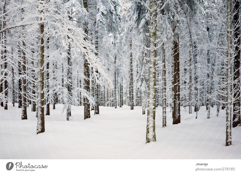 Nature Beautiful White Plant Tree Landscape Winter Forest Cold Environment Snow Emotions Ice Climate Frost Climate change