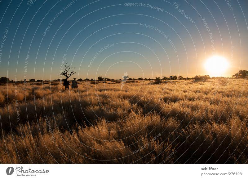 Kalahari Environment Nature Landscape Cloudless sky Sunrise Sunset Sunlight Beautiful weather Drought Plant Grass Bushes Desert Calm Esthetic Tourism