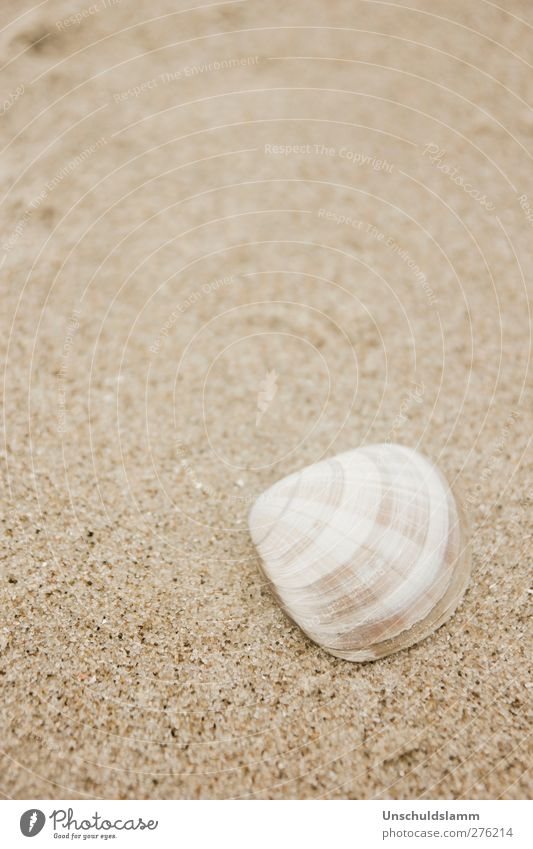 Small and chequered Environment Nature Sand Summer Beach Ocean Mussel Decoration Esthetic Bright Uniqueness Natural Beautiful Brown White Relaxation