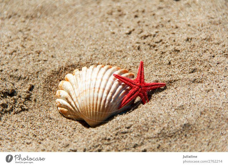 Shell and starfish on the sand Spa Summer Beach Ocean Sand Red Starfish clams sunny light Horizontal background seashells Sink Colour photo Multicoloured
