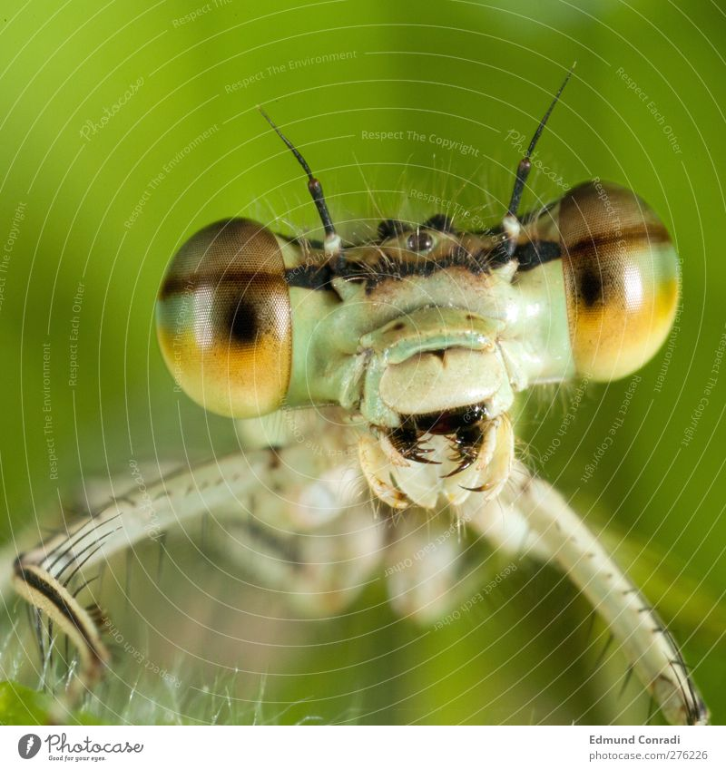 Fear Large Wait Tool Aggression Macro (Extreme close-up) Dragonfly Animal Land-based carnivore Animosity Face Insect Criminal Bad guy Mouth open