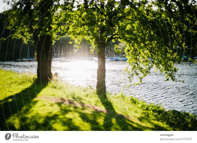 Nature Water Green Beautiful Summer Tree Plant Relaxation Landscape Environment Grass Spring Lake Park Moody Watercraft