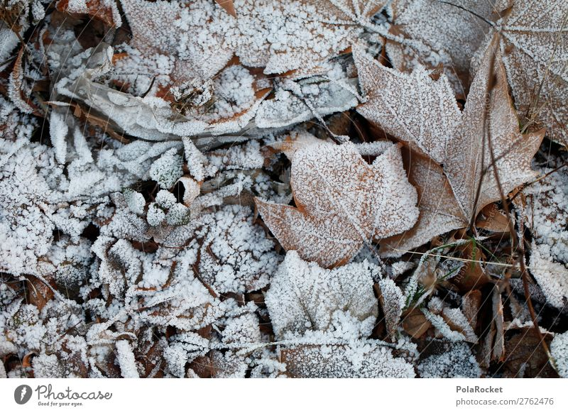 #A# Winter morning I Environment Nature Esthetic Cold Cold shock Winter forest Winter's day Winter festival Leaf Autumn leaves Frozen Colour photo