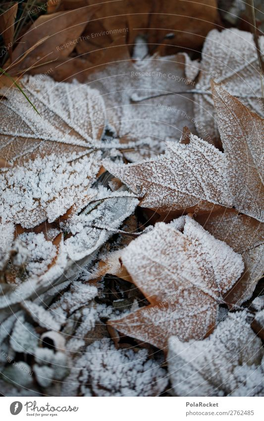 #A# winter leaves Environment Nature Esthetic Leaf Deciduous forest Leafless Frost Winter Winter forest Winter mood Winter's day Cold Colour photo