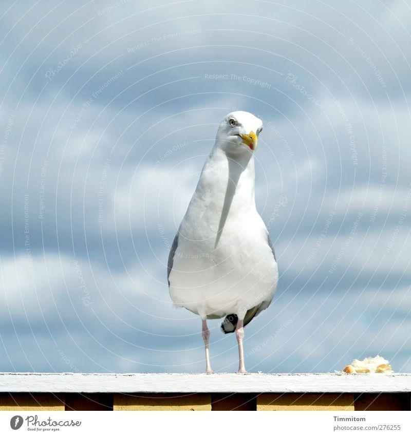 Nature White Vacation & Travel Animal Gray Bird Wild animal Stand Observe Simple Seagull Terrace Feeding Denmark Mistrust