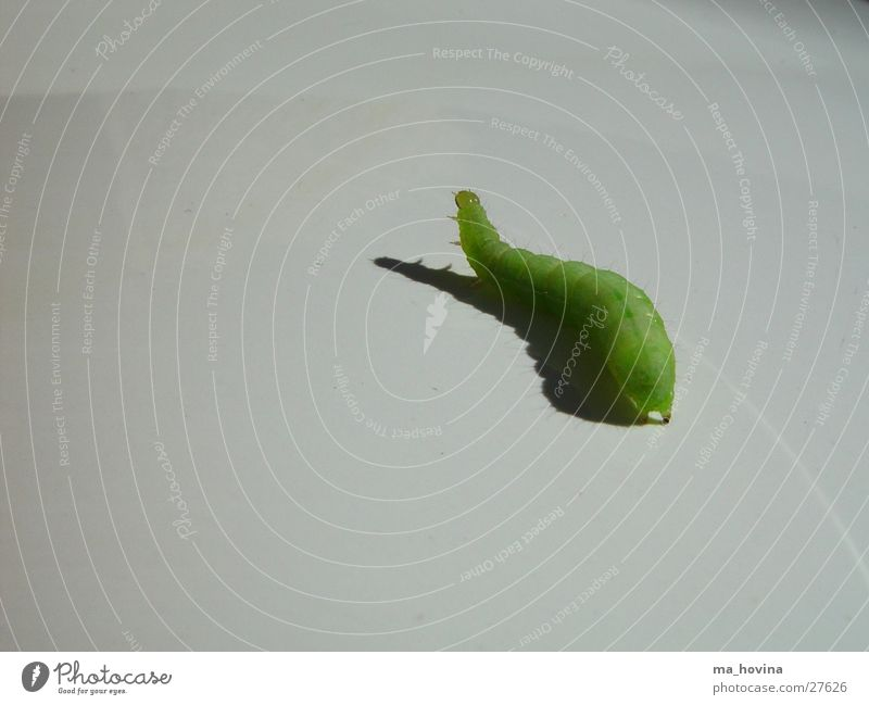 Green Insect Escape Caterpillar