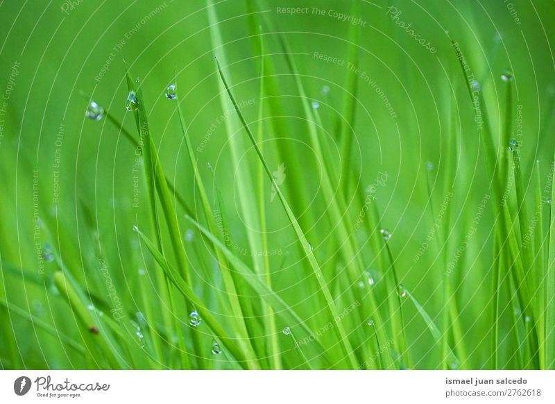drops on the green leaves Grass Plant Leaf Green Drop raindrop Glittering Bright Garden Floral Nature Abstract Consistency Fresh Exterior shot background