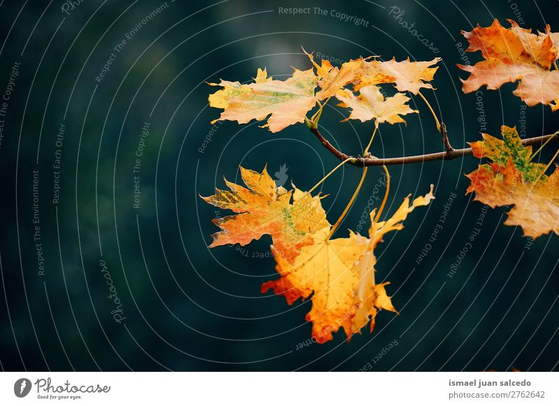 yellow tree leaves Leaf Yellow Nature Abstract Consistency Exterior shot background Beauty Photography fragility Autumn fall Winter